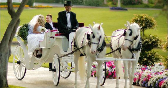 Horse-and-carriage-5701