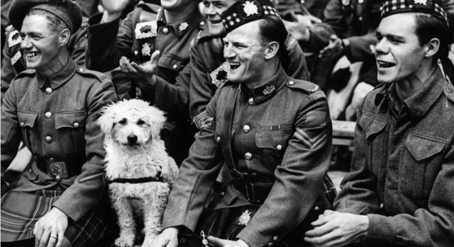 vintage image of dog with canadian soldiers ww2