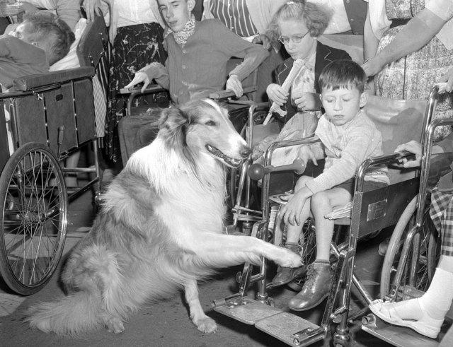 TV's Lassie With CNE Visitors, 1955