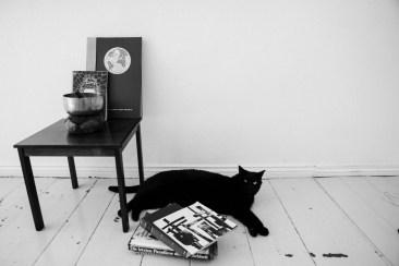 Black Cat Zhi-Mi