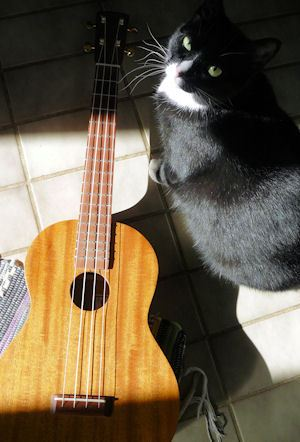 Uke and cat