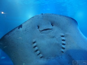 Stingrays have such friendly faces...