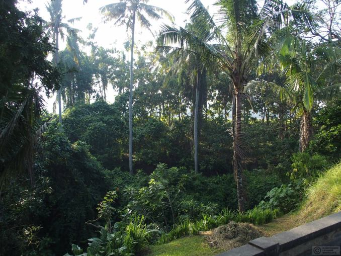 The view from our verandah
