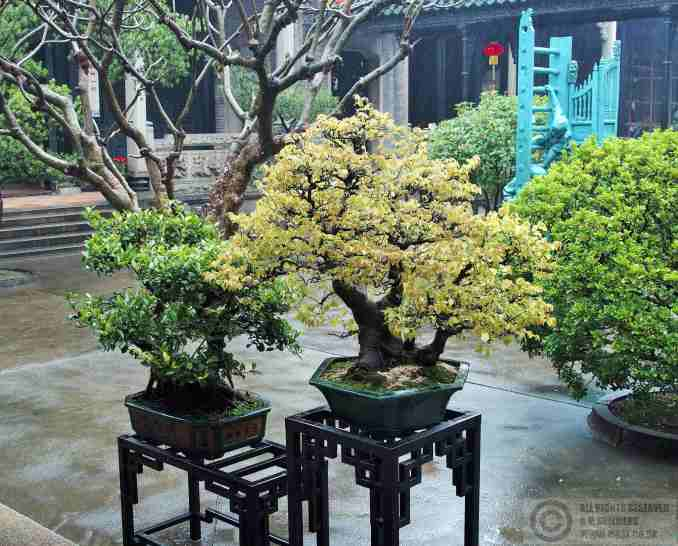The courtyards held an impressive bonsai collection