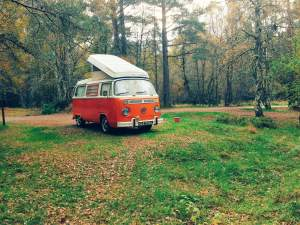 Vintage VW Campers Agnes in ancient forest at Glenmore