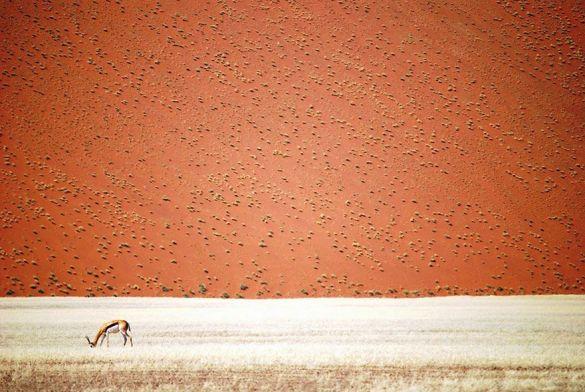 Desierto de Namibia (Doris Landertinger).