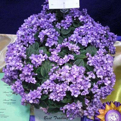 Rob's Boolaroo - The Violet Barn - African Violets and More
