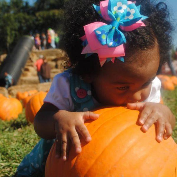 Pumpkin Patch 2 (1)