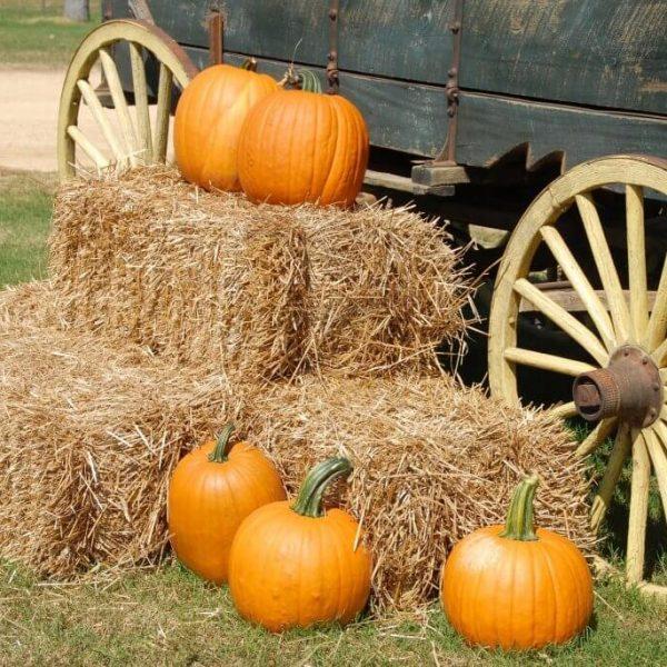 Pumpkin Patch 4 (1)