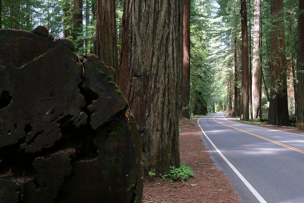 Avenue of the Giants, Garberville, California (Photo Credit: Wikipedia)