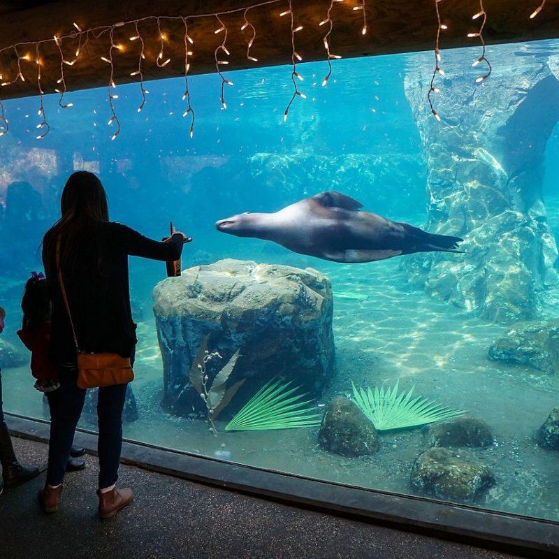 Sea Lion Cove at the Fresno Chaffee Zoo, Fresno, California (Photo Credit: Wikipedia)