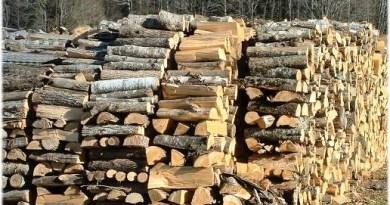 Спрямо четирима мъже и една жена са образувани полицейски производства за притежание или транспортиране на незаконно добита дървесина