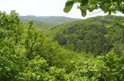Спипаха мним горски в резерват за глухари