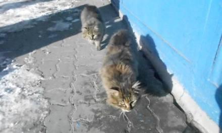 И Велинград помага на бездомните животни в студа