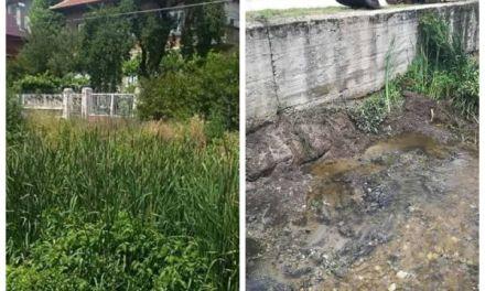 Община Велинград предприе действия по почистване на река Луковица