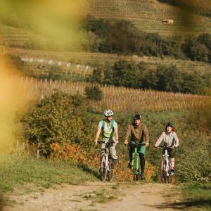 Bike, Vipava Valley