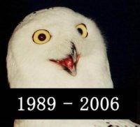 ORLY? Owl