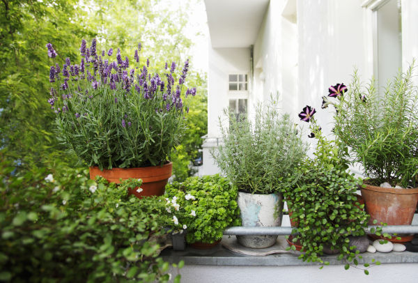 Privacy Ideas For The Garden Terrace And Balcony Viplounge Ch