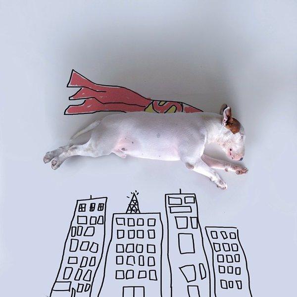 這名被妻子拋棄的藝術家,將心愛小狗變成網絡明星,靈感竟來自空無一物的家?!