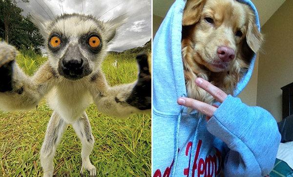 23幅超可愛動物神級自拍照,全部都比人類拍的好太多!