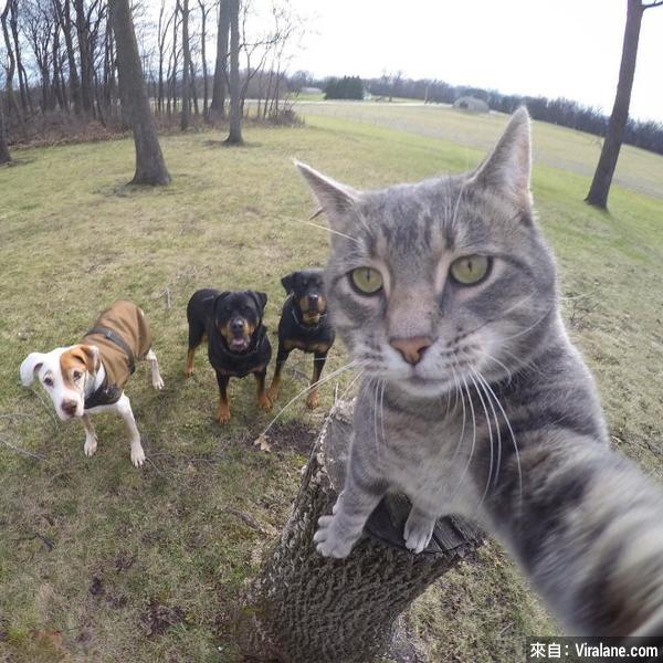 貓貓的自拍,遠比你拍得好看!