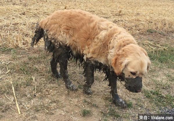 19個你不應讓小狗在泥漿裡玩耍的原因