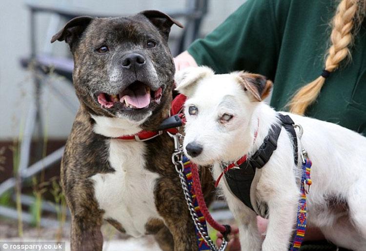 Este perro viejo y ciego y su amigo y guía fueron abandonados juntos en un tunel. Esta es su emotiva historia