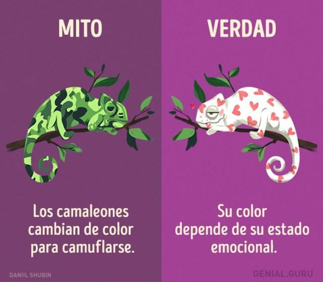13 mitos sobre los animales en los que todavía creemos
