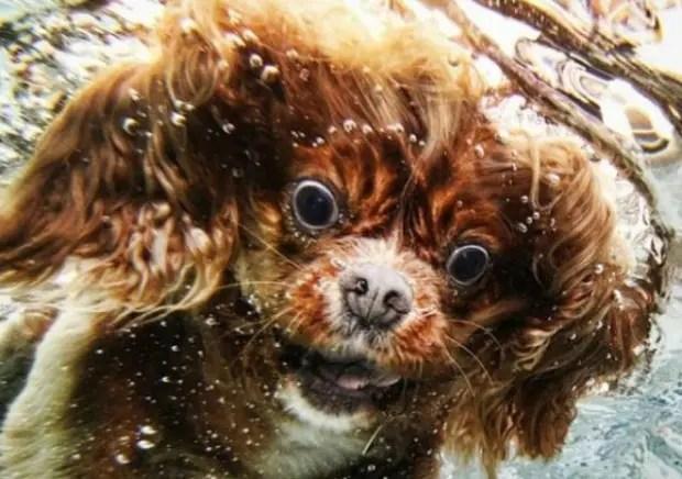 ariel perro