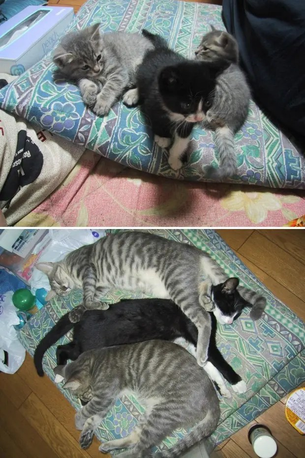 gatos creciendo (15)