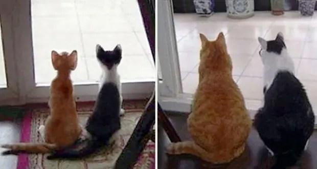 gatos creciendo (8)