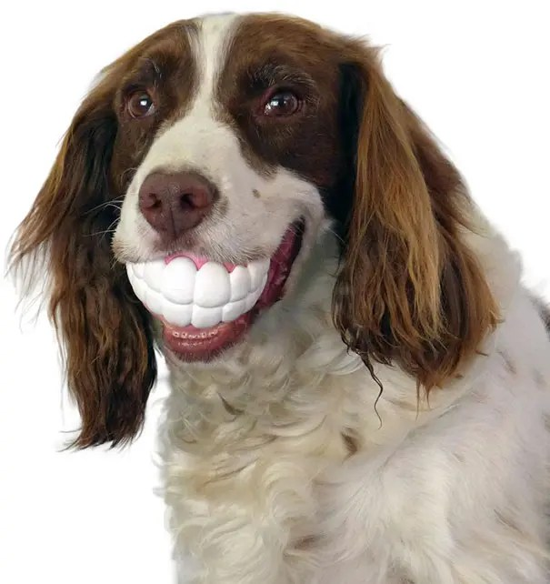 juguetes de perro graciosos (6)
