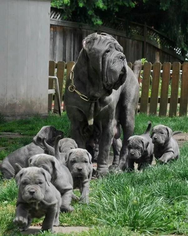 maternidad-animales-09