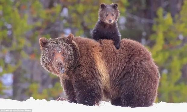maternidad-animales-21