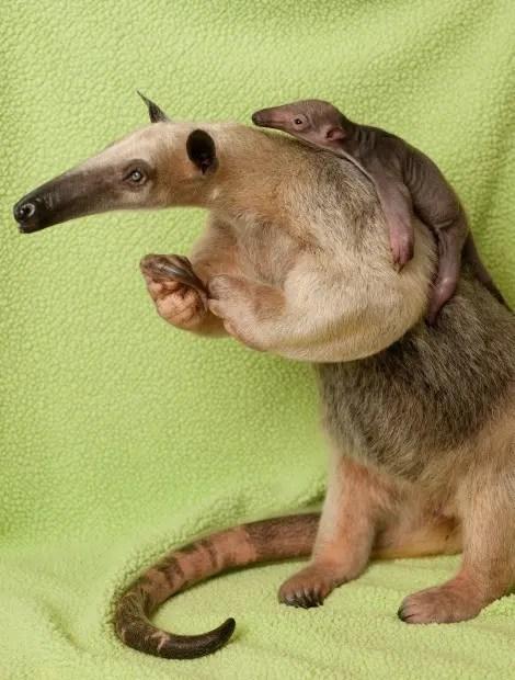 maternidad-animales-25