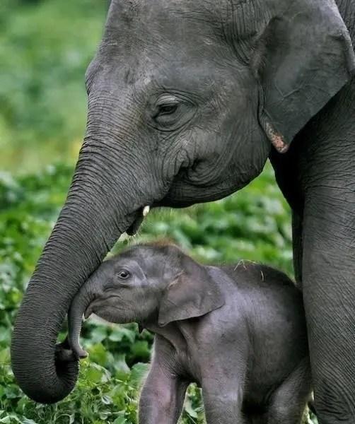 maternidad-animales-26