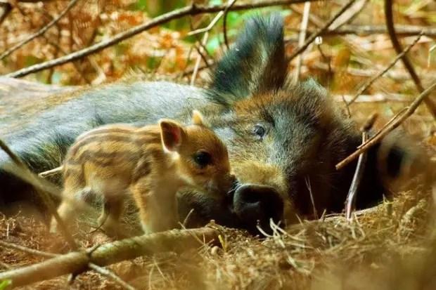 maternidad-animales-27