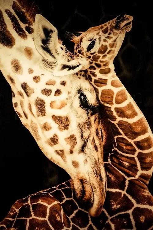 maternidad-animales-29