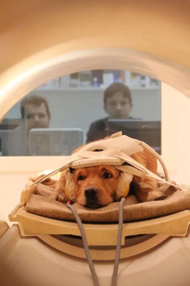 perpectiva canina