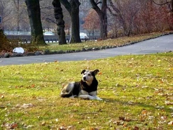 perro congelado