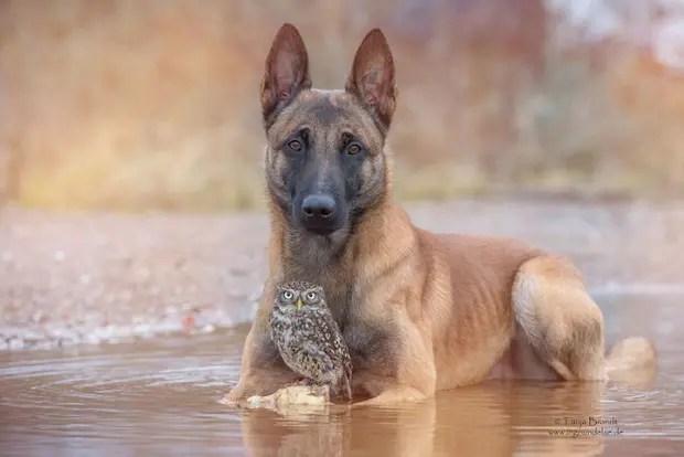 perro-y-buho-amigos-11