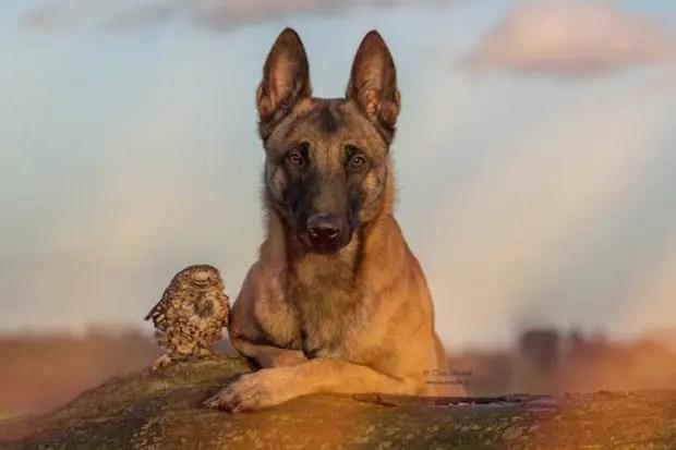 perro-y-buho-amigos-3