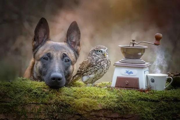 perro-y-buho-amigos-8