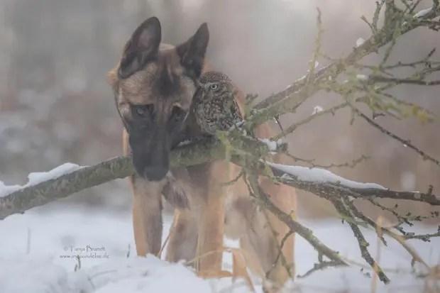 perro-y-buho-amigos-9