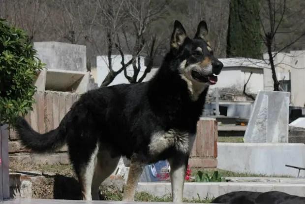 capitan el perro que cuida la tumba de su amo (7)