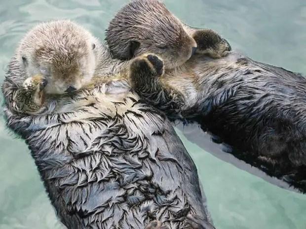 animal-love-friendship-211__880
