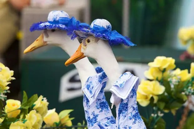duck_pato_disfraz_desfile2
