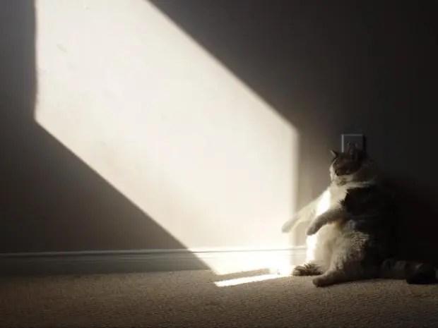 gatos rebeldes sentados13