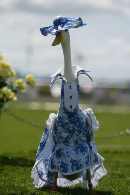 patos-elegantes1