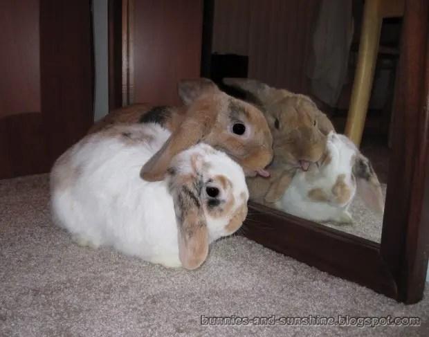 bunniesand